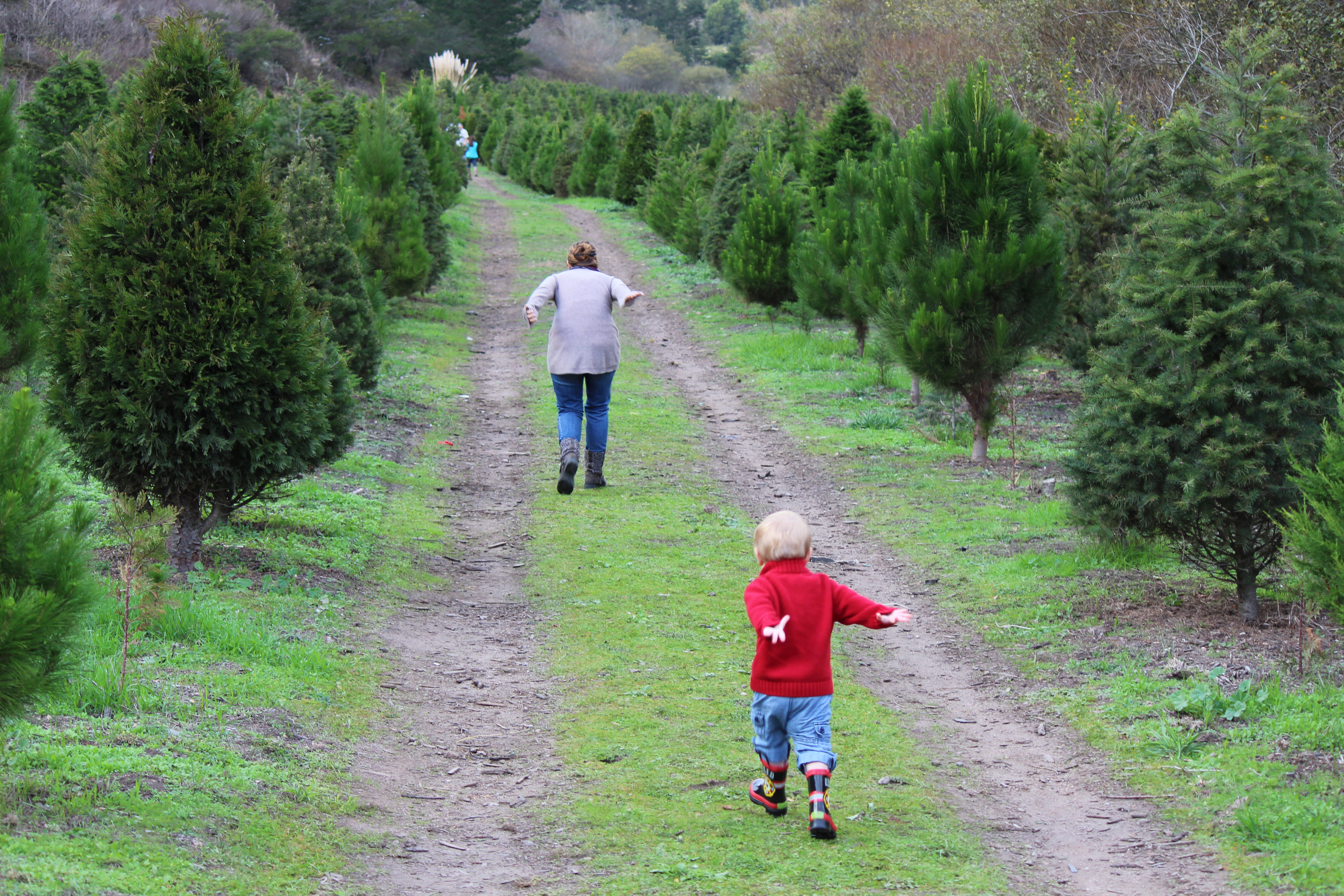 well now that we have little ones of our own and have moved to the peninsula new traditions are emerging still cutting down a real christmas tree is a
